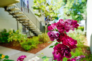 Fuchsia flower near the Bart Plaza apartment building